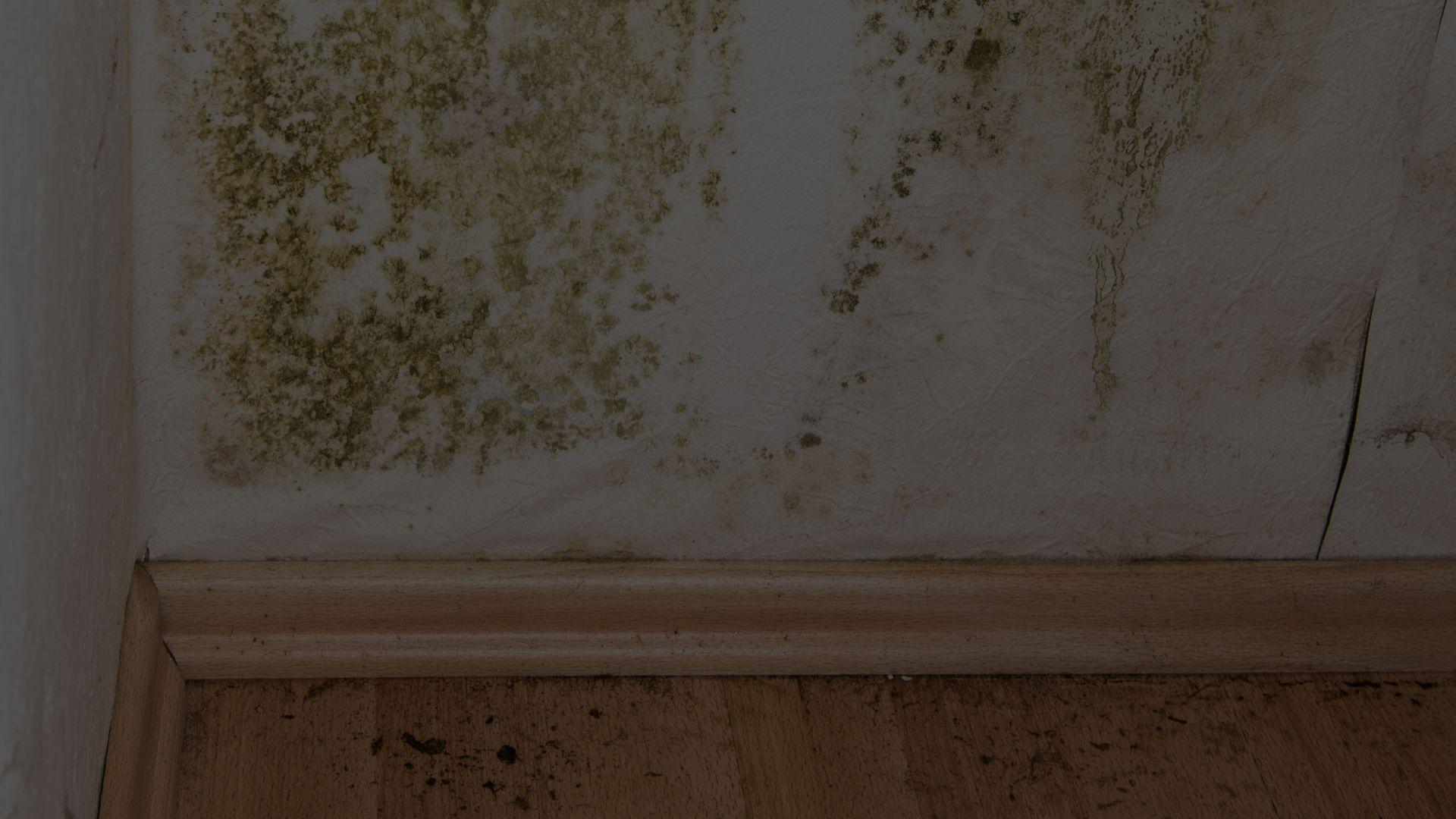 Bescherm uw huis en uw gezin tegen gevaarlijke schimmel